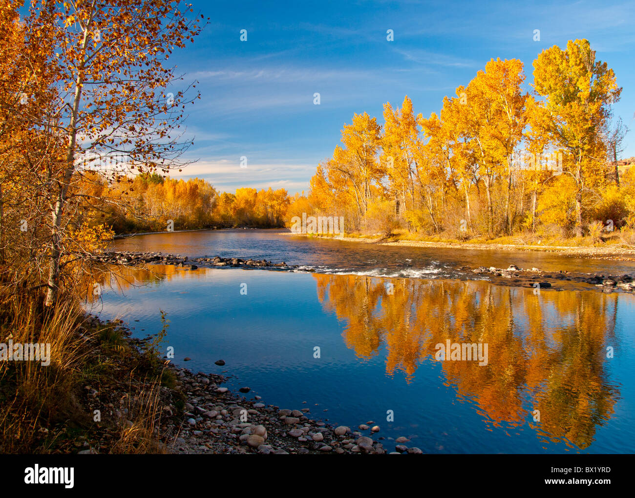 USA, Idaho, City of Boise, Scenic view of Cottonwood trees reflecting fall colors in the Boise River, Boise River - Stock Image