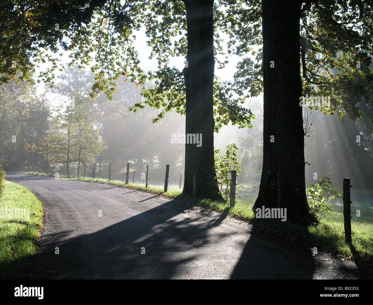 beams branches clearing fog rays street sun sun rays rays of sunshine wood - Stock Image