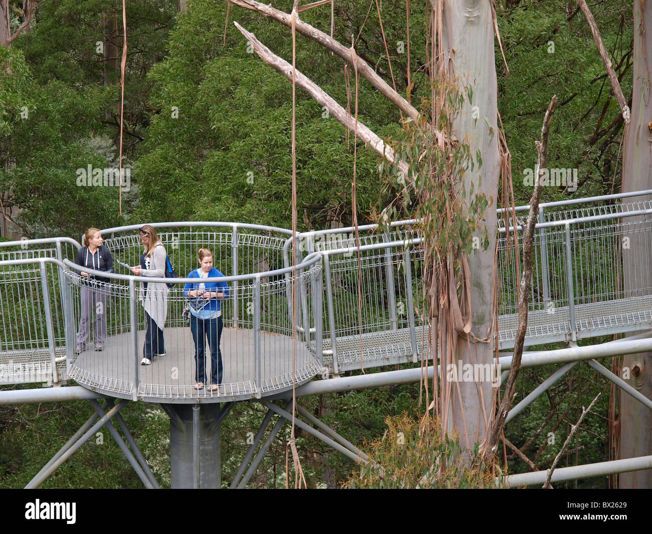TOURISTS ON WALKWAY AND STAIRS OF THE OTWAY FLY TREETOP ADVENTURE VICTORIA AUSTRALIA Stock Photo