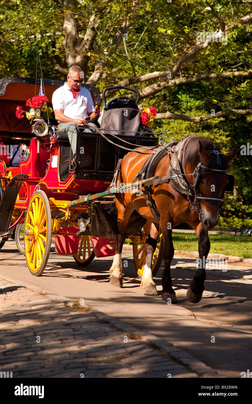 Texting while driving - carriage driver in Central Park, New York City USA - Stock Image