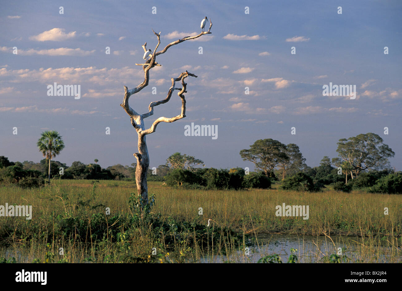 Landscape Pousada das Araras Pantanal South of Cuiaba Mato Gross Brazil South America - Stock Image