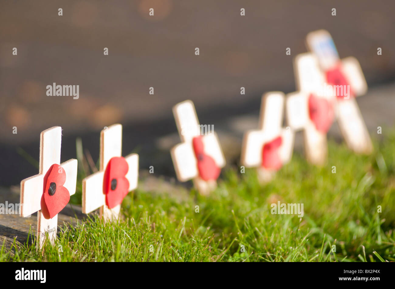 Remembrance day crosses and poppies at Abbey Park War memorial in Evesham Worcestershire UK - Stock Image
