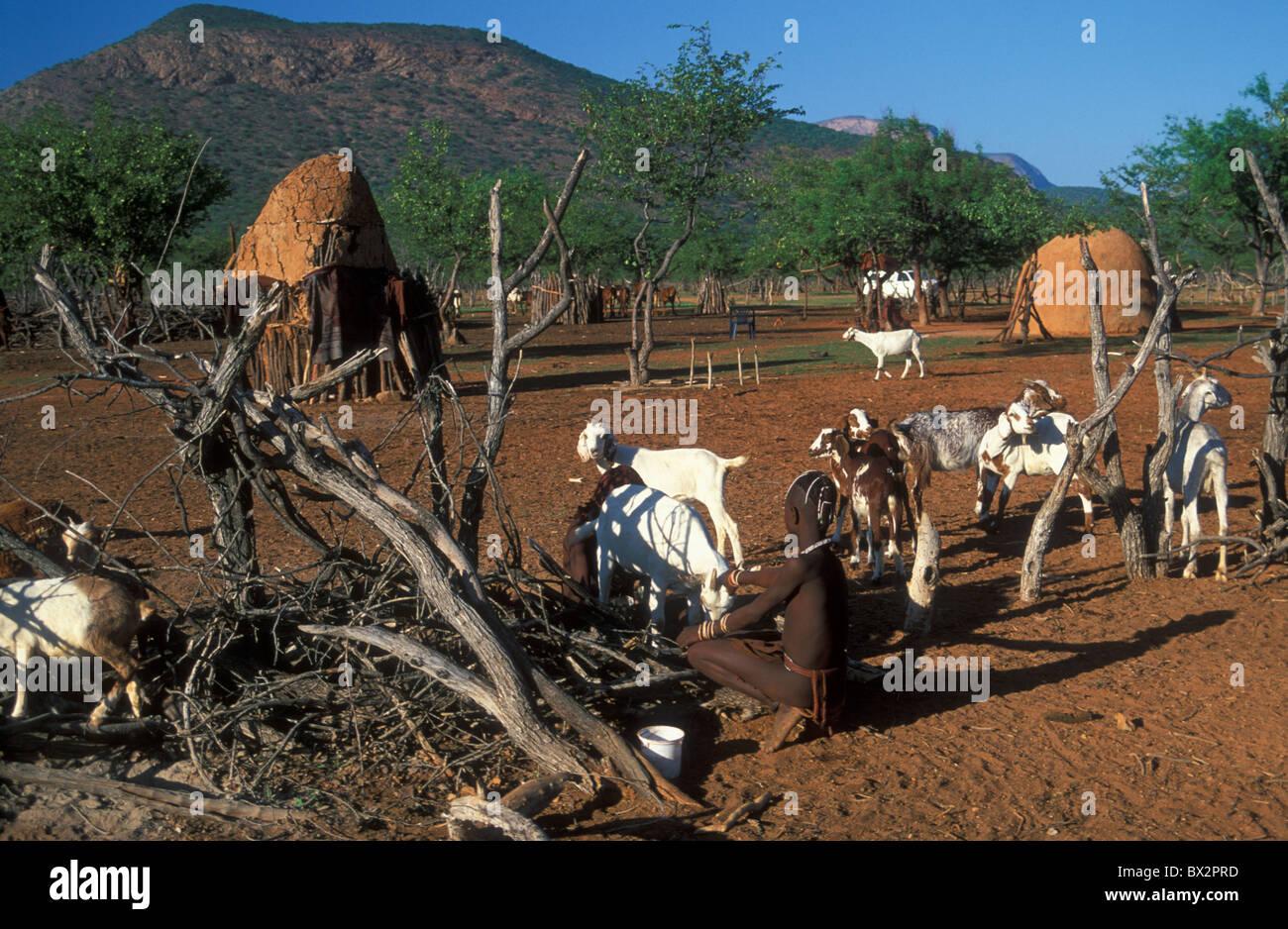 Africa children goats Himba Hut Kaokoveld Kraal Namibia Africa nomadic Ovahimba people shed storage tr - Stock Image