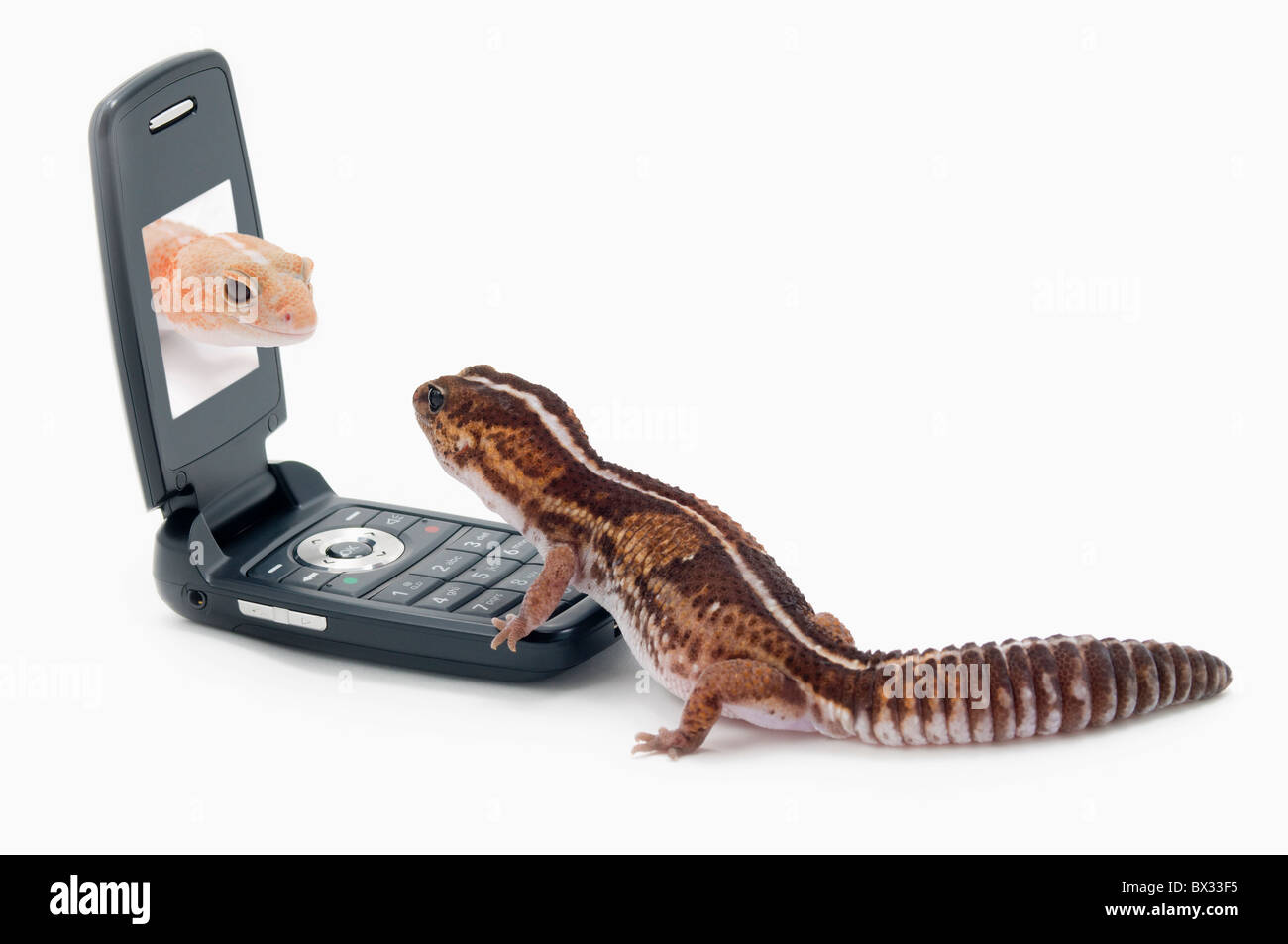 Image result for images of lizard and cell phone