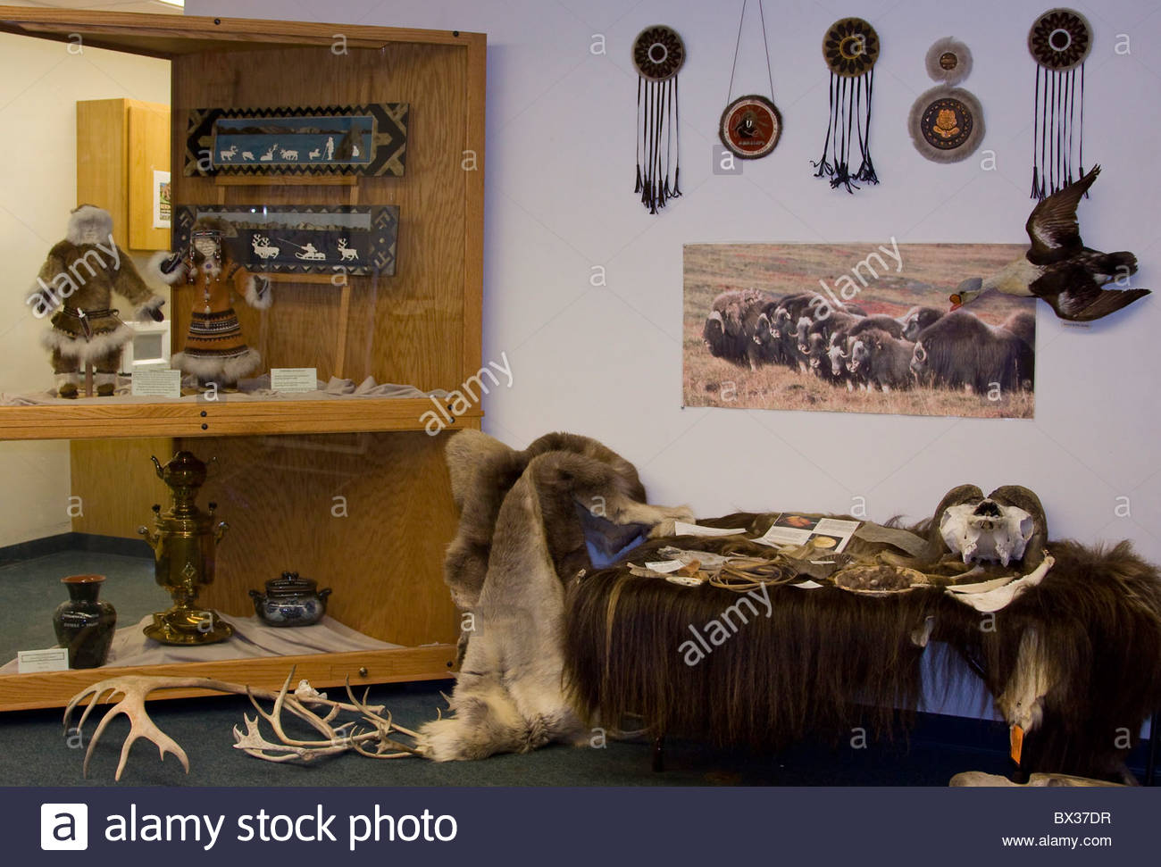 Alaska. Display illustrating Beringia art, culture and animals from the Russian influence to current wildlife such - Stock Image