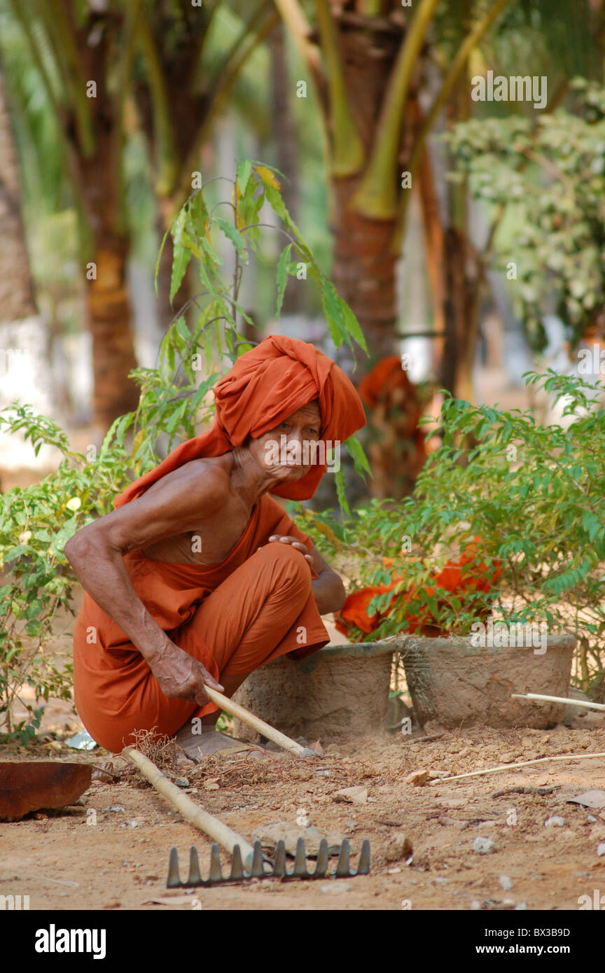 old Buddhist taking care of his garden - Stock Image