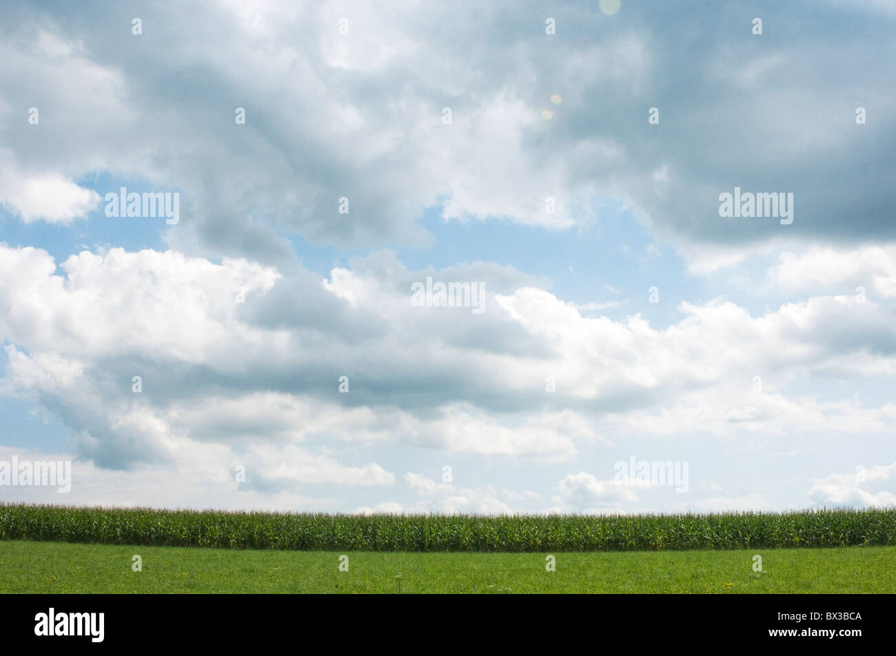 summer sky over crop field - Stock Image