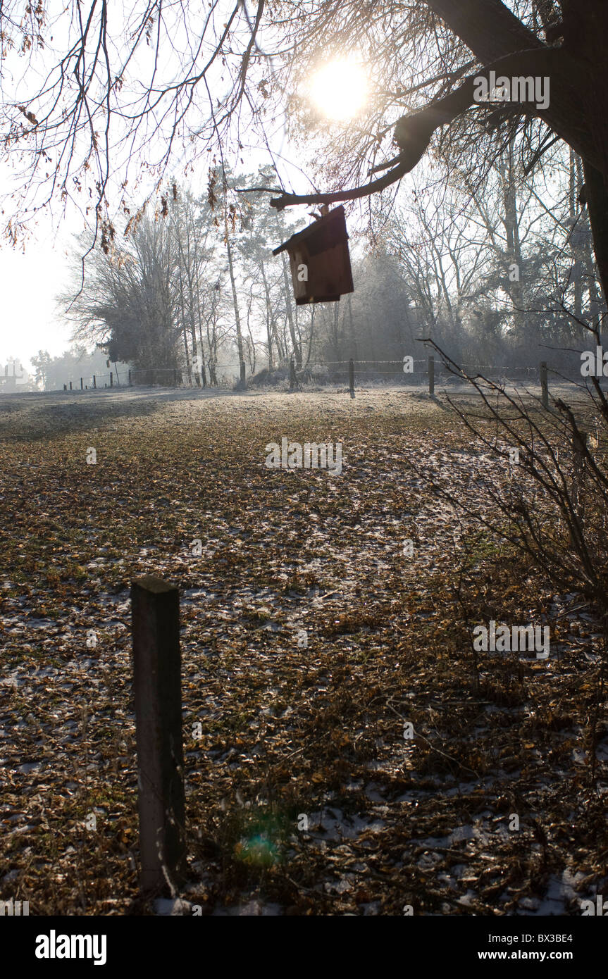 birdhouse hanging on tree in autumn - Stock Image