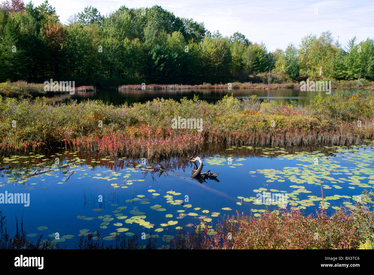 Wetland habitat with aquatic vegetation near Cadillac, Michigan, USA. - Stock Image