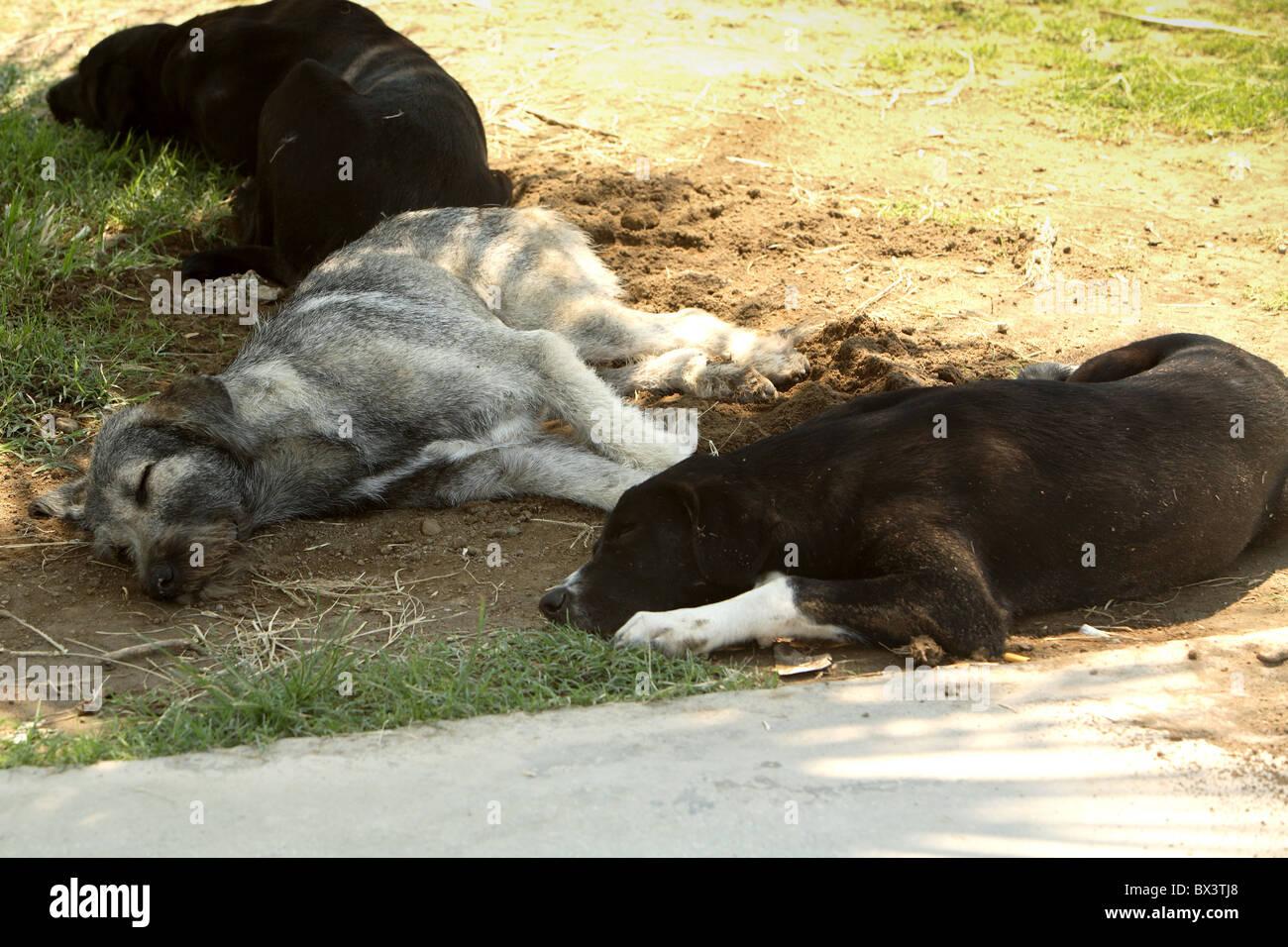 Dogs sleeping in the shade.Kusadasi Turkey - Stock Image