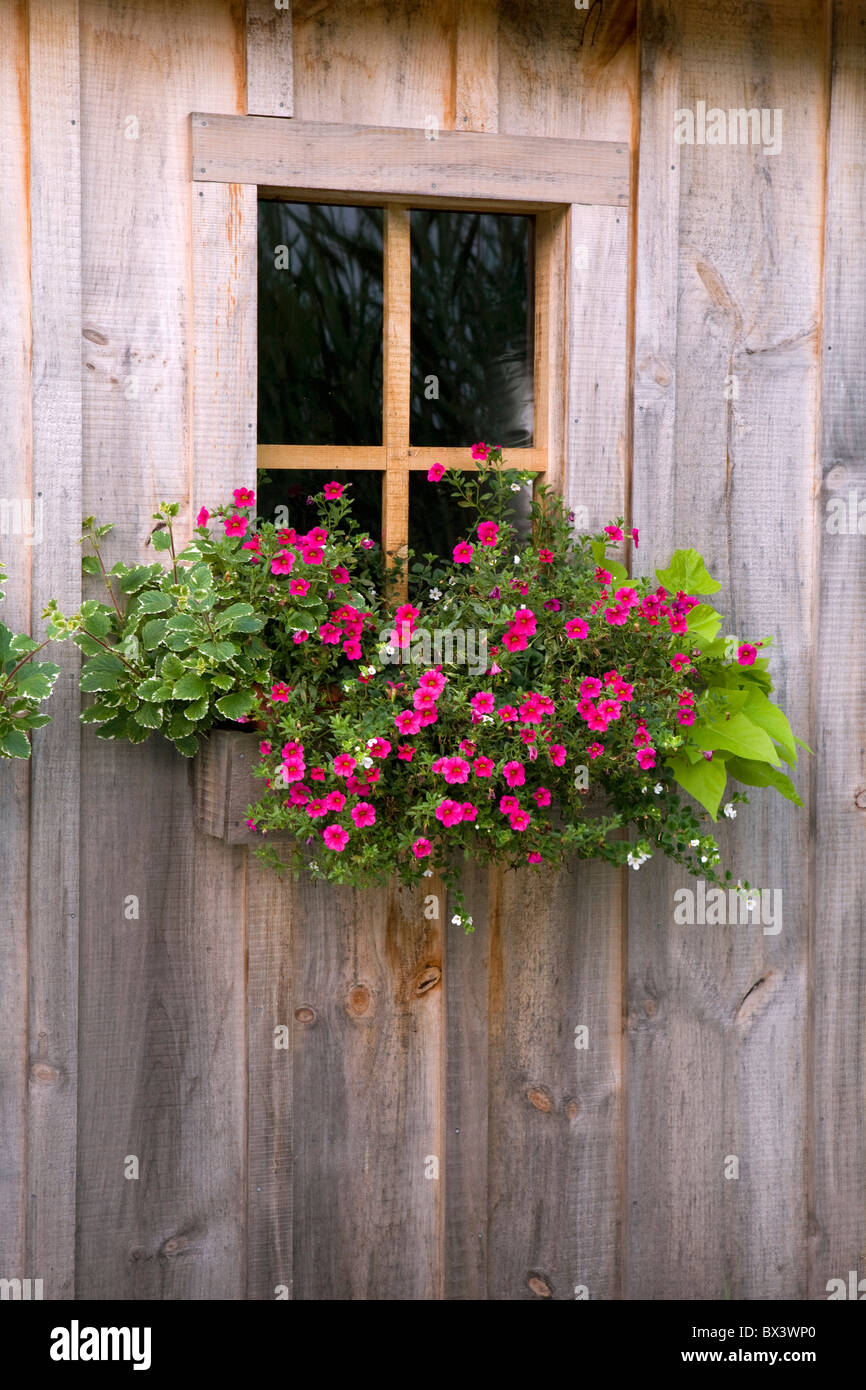 Wooden Shed With A Flower Box Under The Window - Stock Image