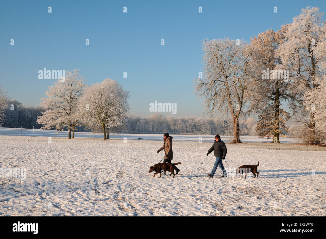 Man and woman walking two dogs in Beacon Park in winter snow and ice with hoar forst on trees Lichfield Staffordshire - Stock Image