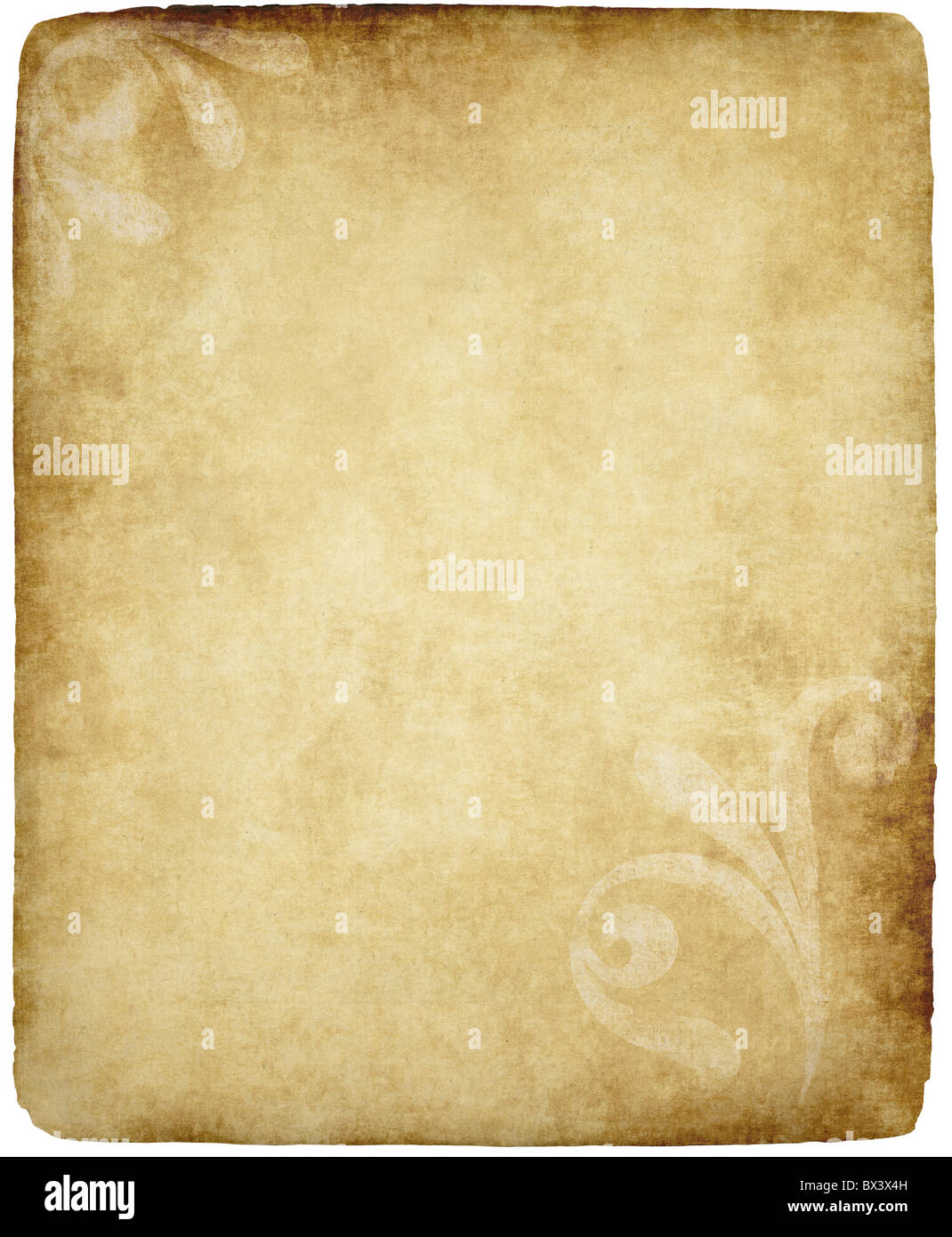 Very large old paper or parchment background texture with large floral  MJ01