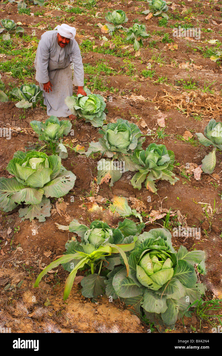 Egypt North Africa farmer peasant farmer field vegetable cultivation outhouse agriculture East - Stock Image