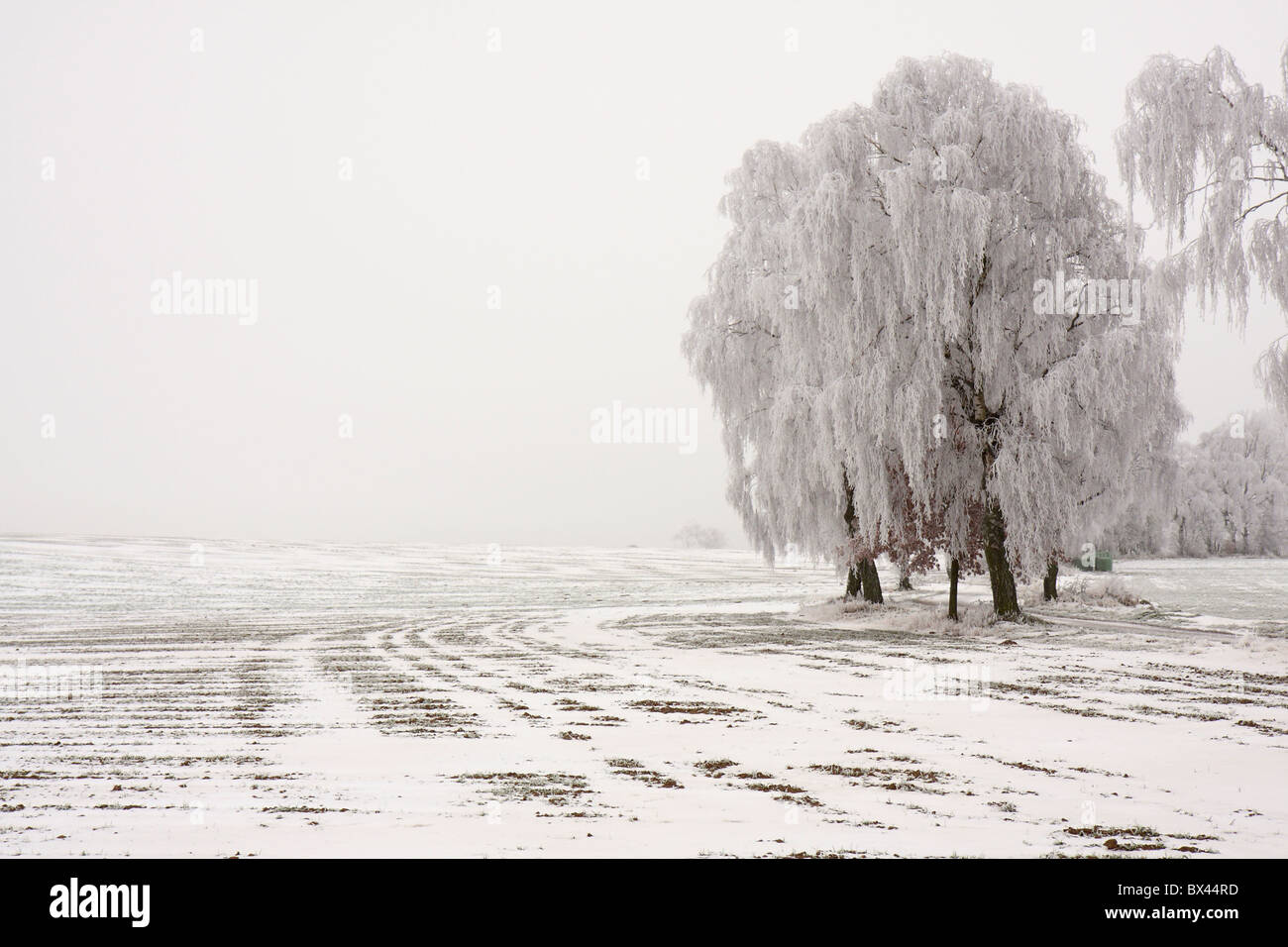 Shot of trees the morning after a very cold night, heavy hoar frost, mixed with remnants of snow. - Stock Image