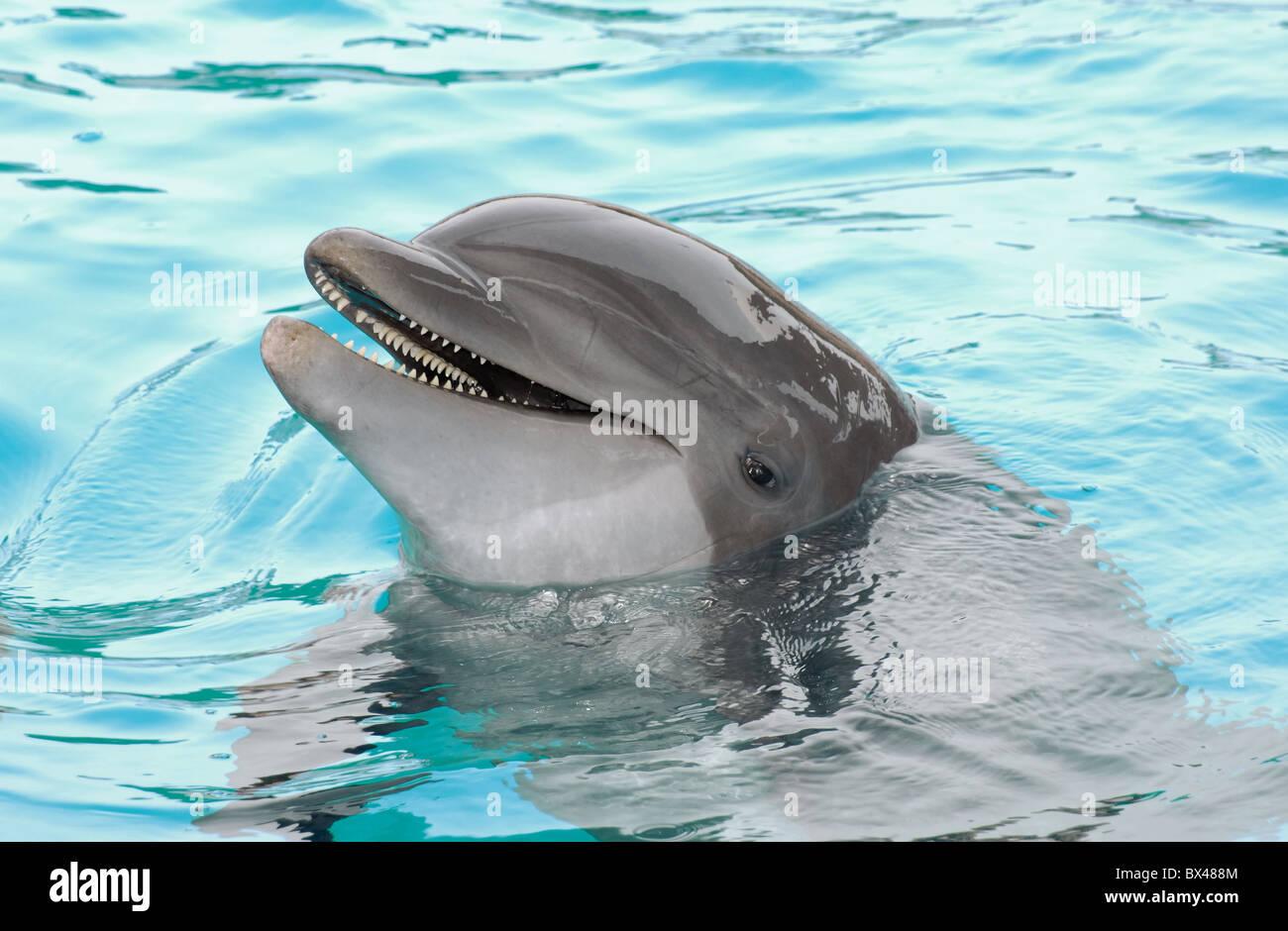 Dolphin - Stock Image