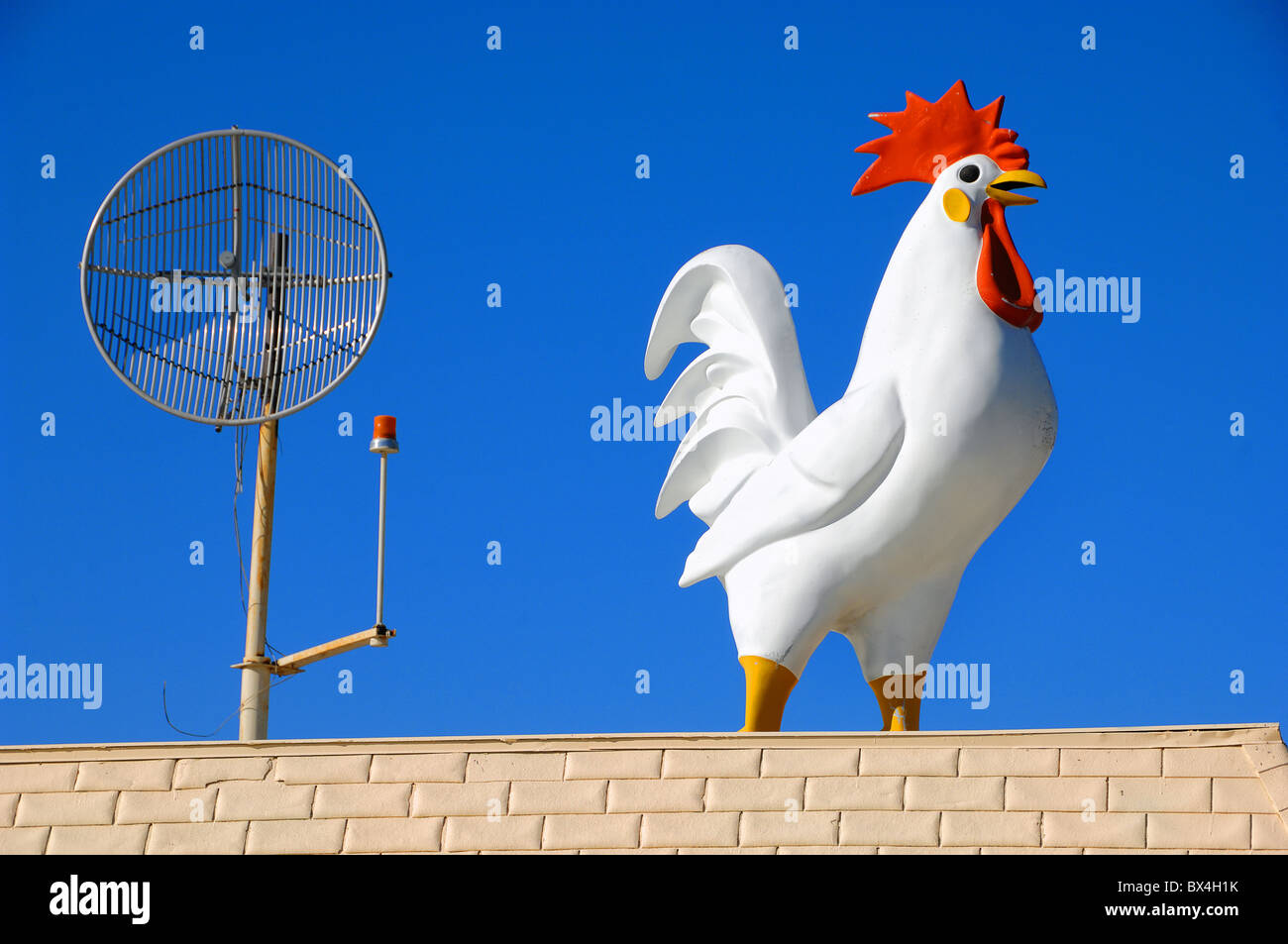 This huge cockerel bestrides the roof of a restaurant near Yuma, Arizona, although the restaurant is just across - Stock Image