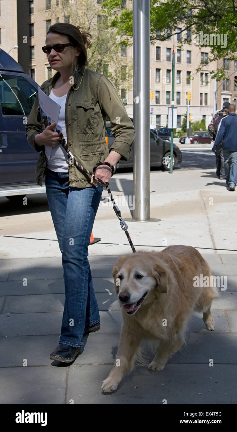 A woman walks her golden retriever in New York City. - Stock Image
