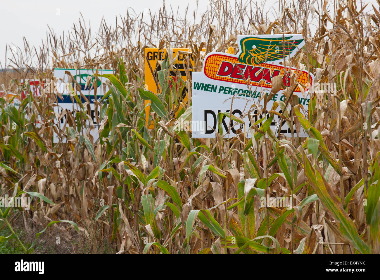 St. Nazianz, Wisconsin - Signs mark different crop varieties in a corn field. - Stock Image