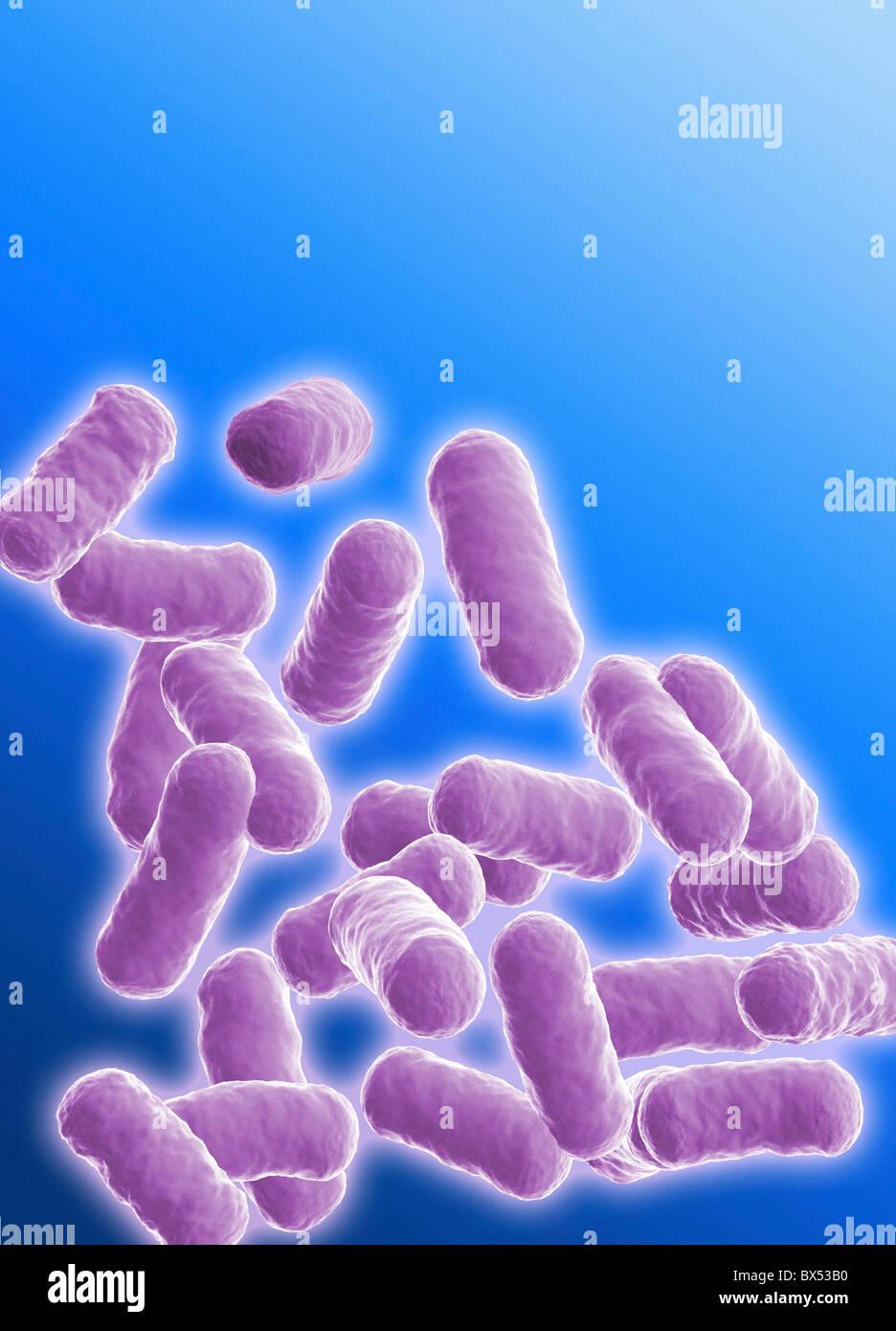 rod shape bacteria stock photos rod shape bacteria stock images