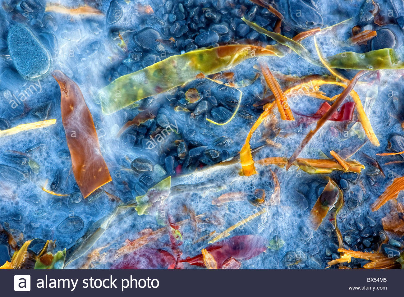 Detailed long exposure image of colorful seaweed as the waves rush in on a beach in Aialik Bay, Kenai Fjords national - Stock Image