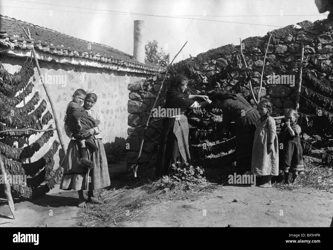 people, family drying tobacco leaves, Macedonia, circa 1916, Additional-Rights-Clearences-NA - Stock Image