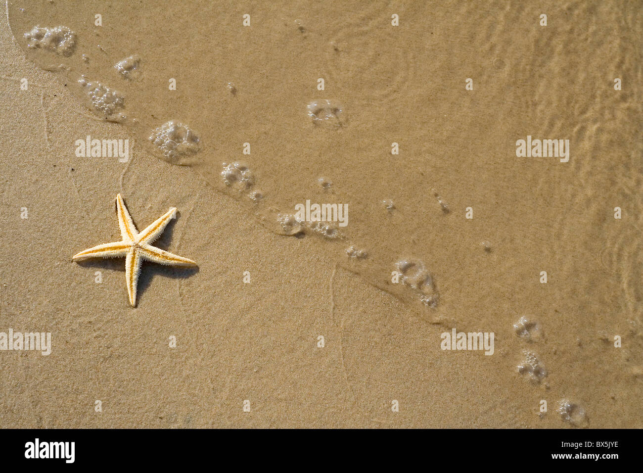 the starfish on the beach - Stock Image
