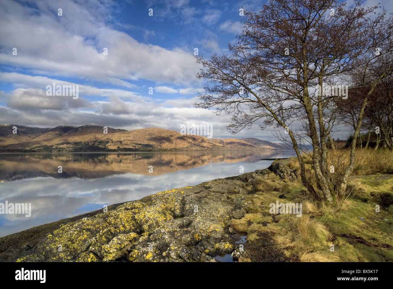 Loch Linnhe in flat calm winter weather with reflections of distant mountains and tree-lined shoreline, Highland, - Stock Image