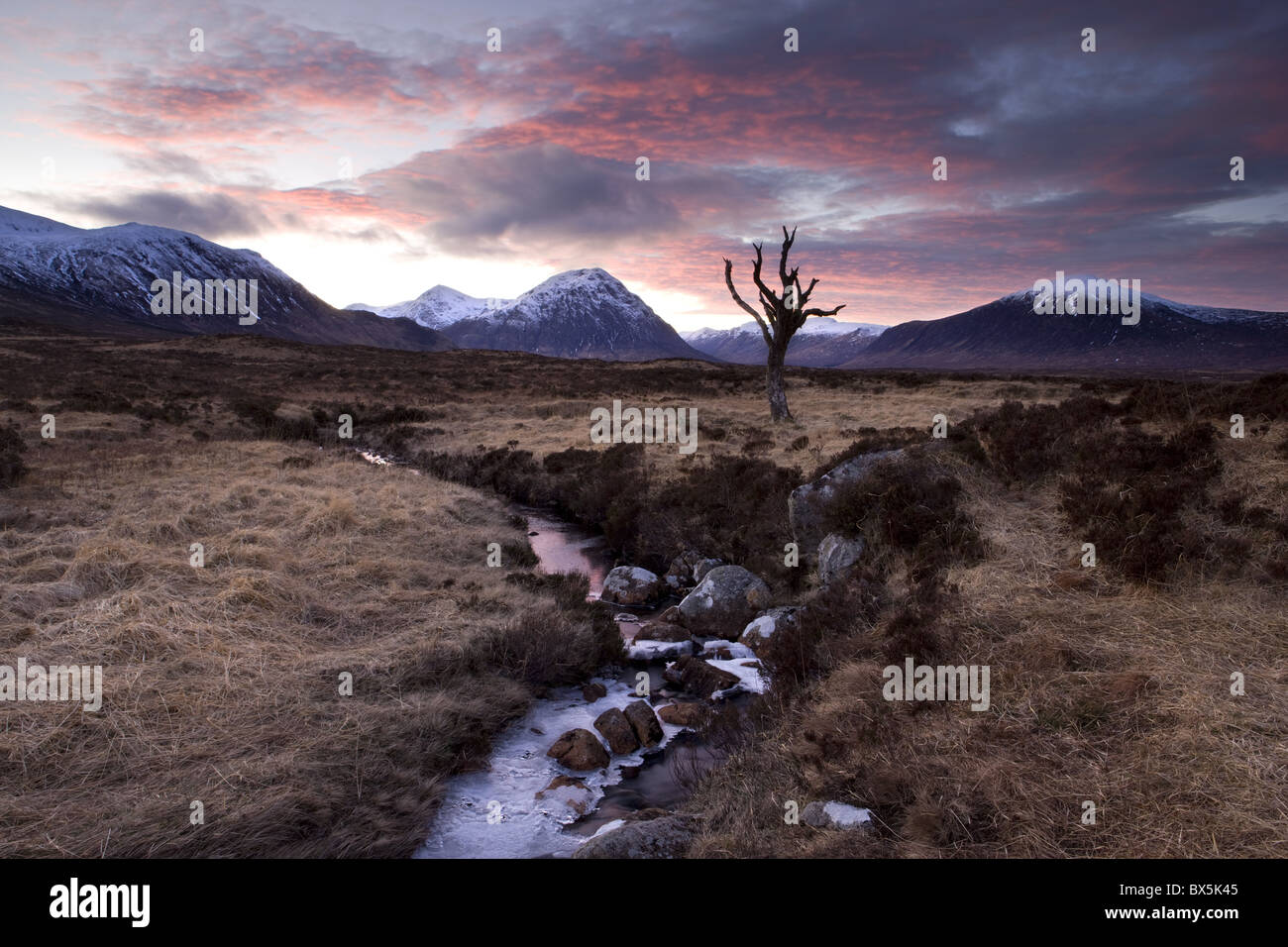 Winter view of Rannoch Moor at sunset with dead tree, frozen stream and snow-covered mountains in the distance, - Stock Image