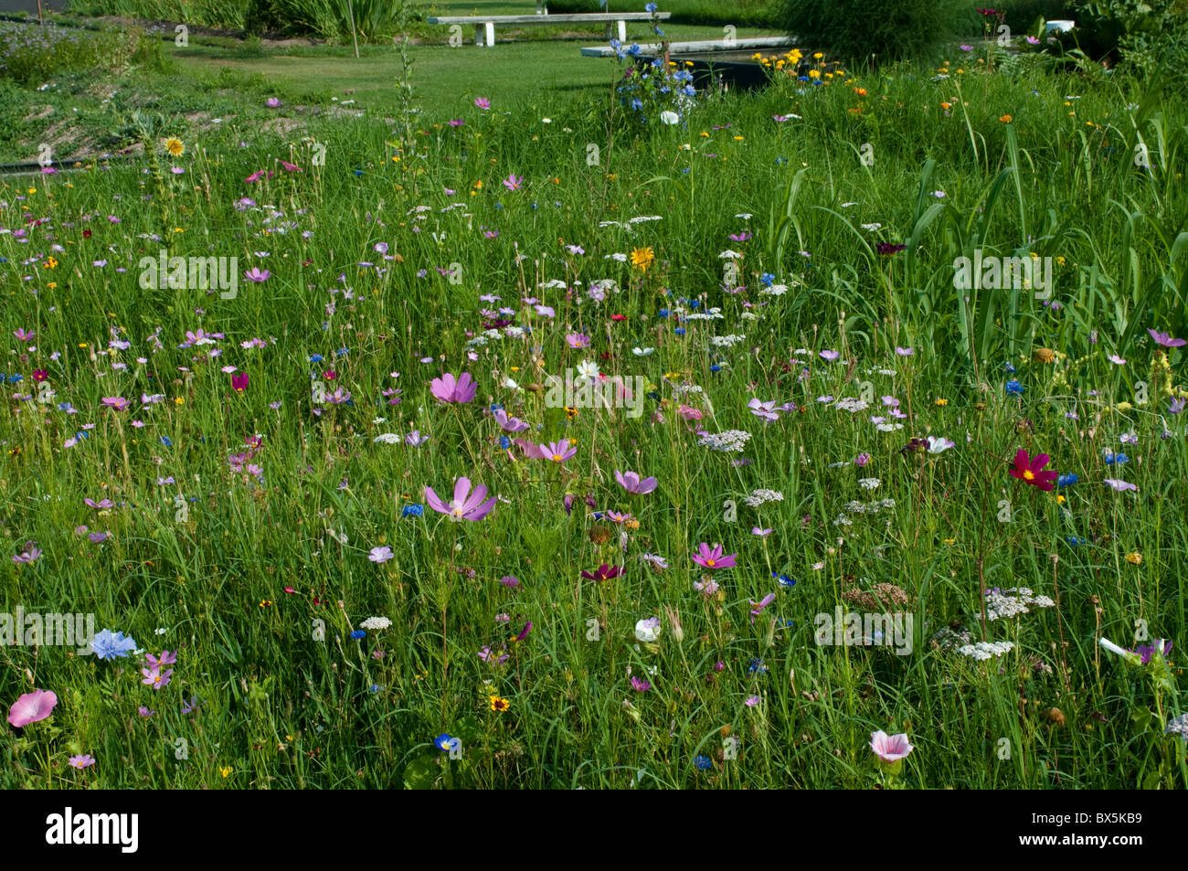 Meadow with summer flowers, Botanical Garden, Bordeaux, France - Stock Image
