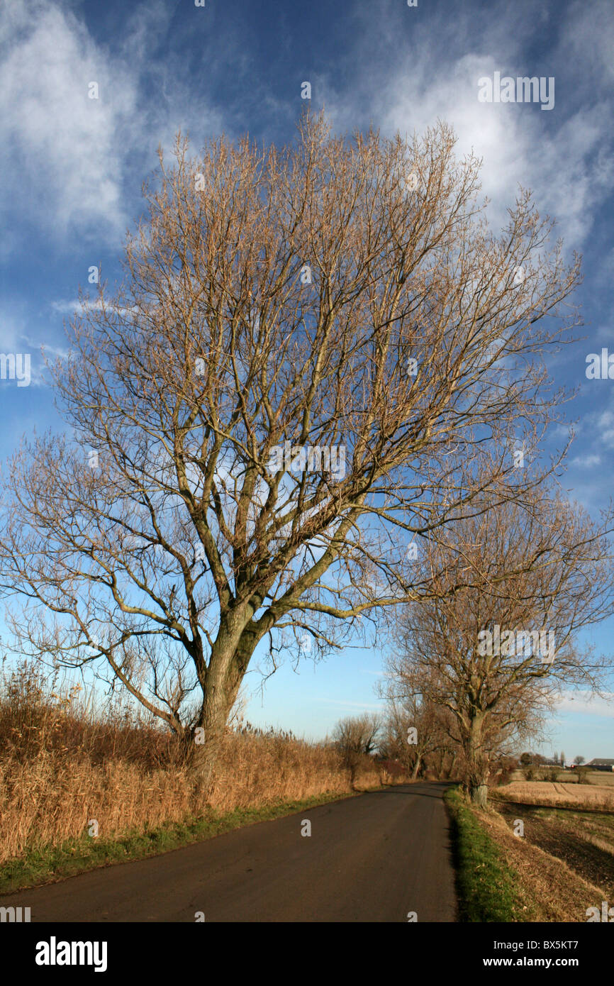 Bare Winter Trees On A Country Lane In Lancashire - Stock Image