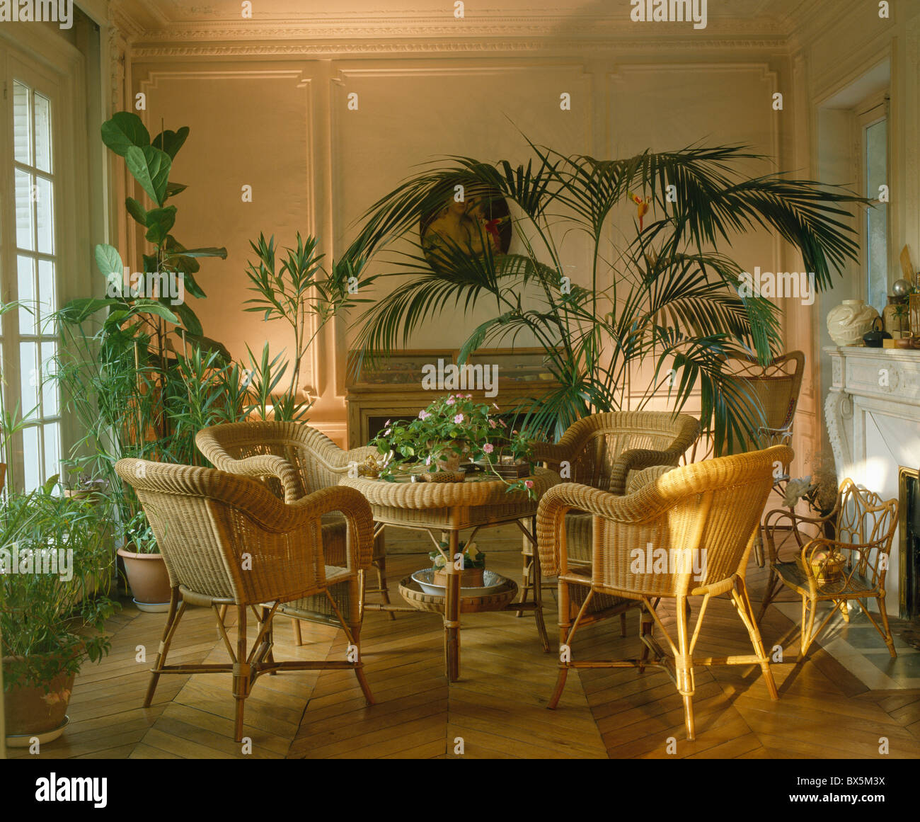 Lighting for houseplants Backyard Cane Chairs And Lush Green Houseplants In French Townhouse Dining Room With Uplighting Alamy Cane Chairs And Lush Green Houseplants In French Townhouse Dining