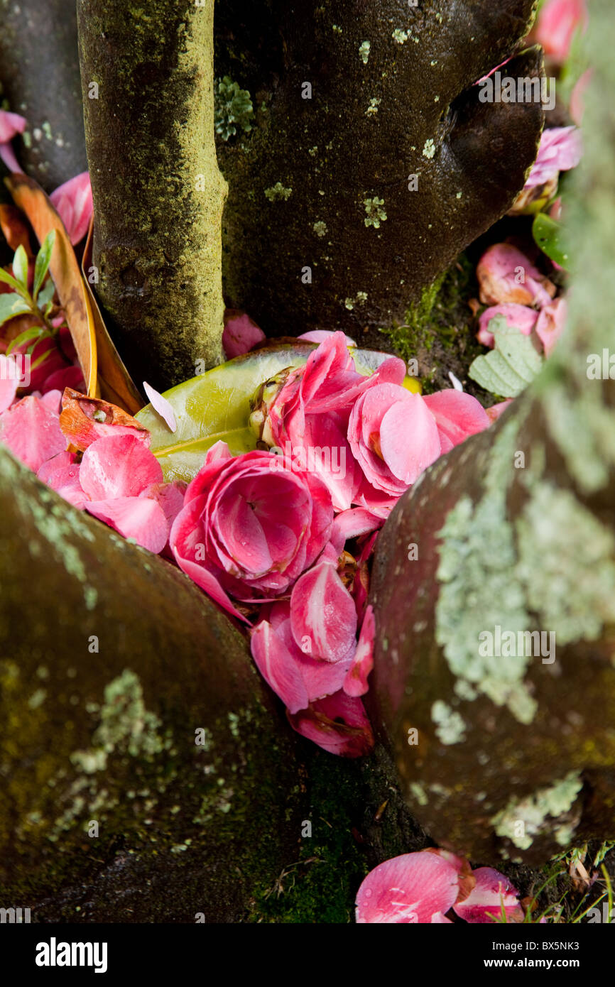 Pink Tree Trunks Stock Photos Pink Tree Trunks Stock Images Alamy