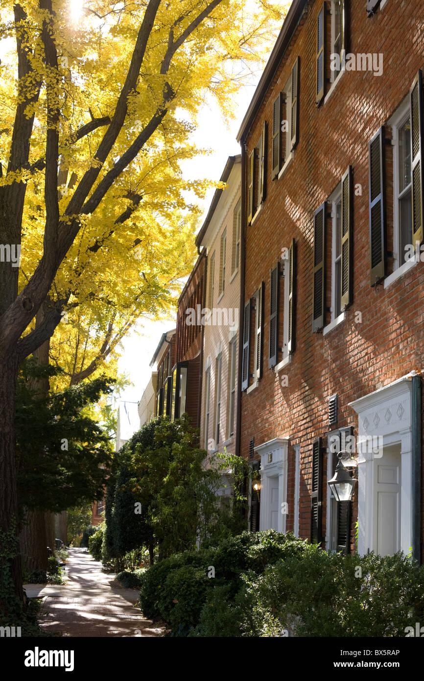 Ginkgo trees line street in autumn, Georgetown, Washington, DC - Stock Image