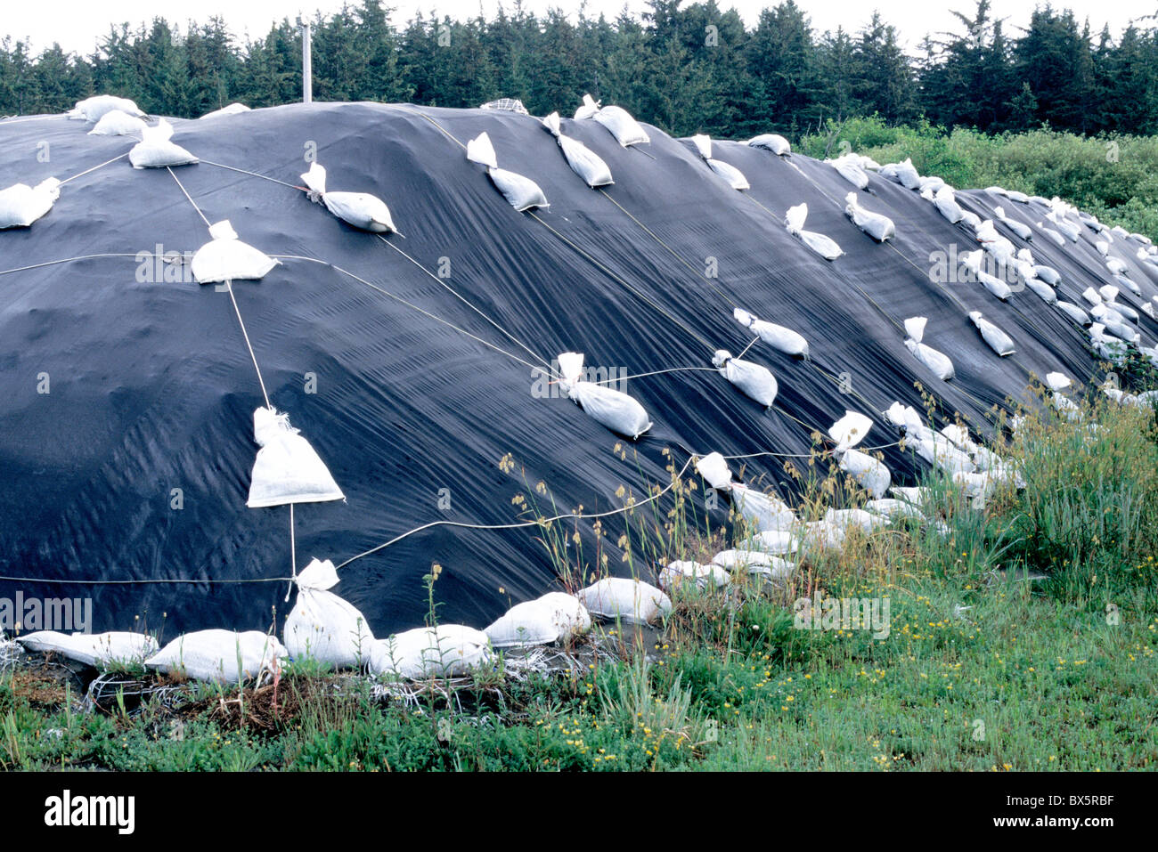 Covered contaminated soil, aerating to remove contaminants, - Stock Image