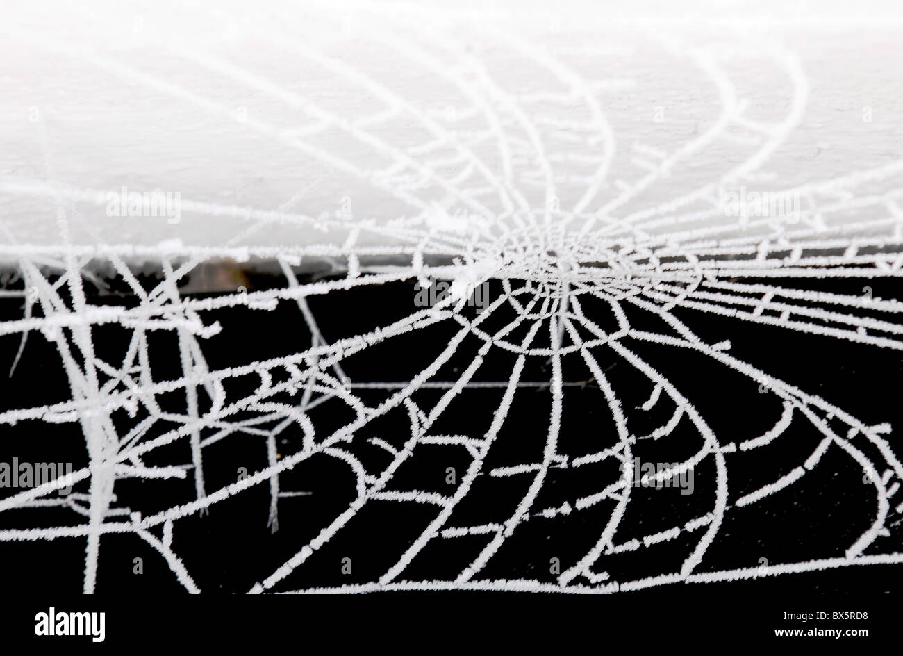 A cobweb covered in frost - Stock Image