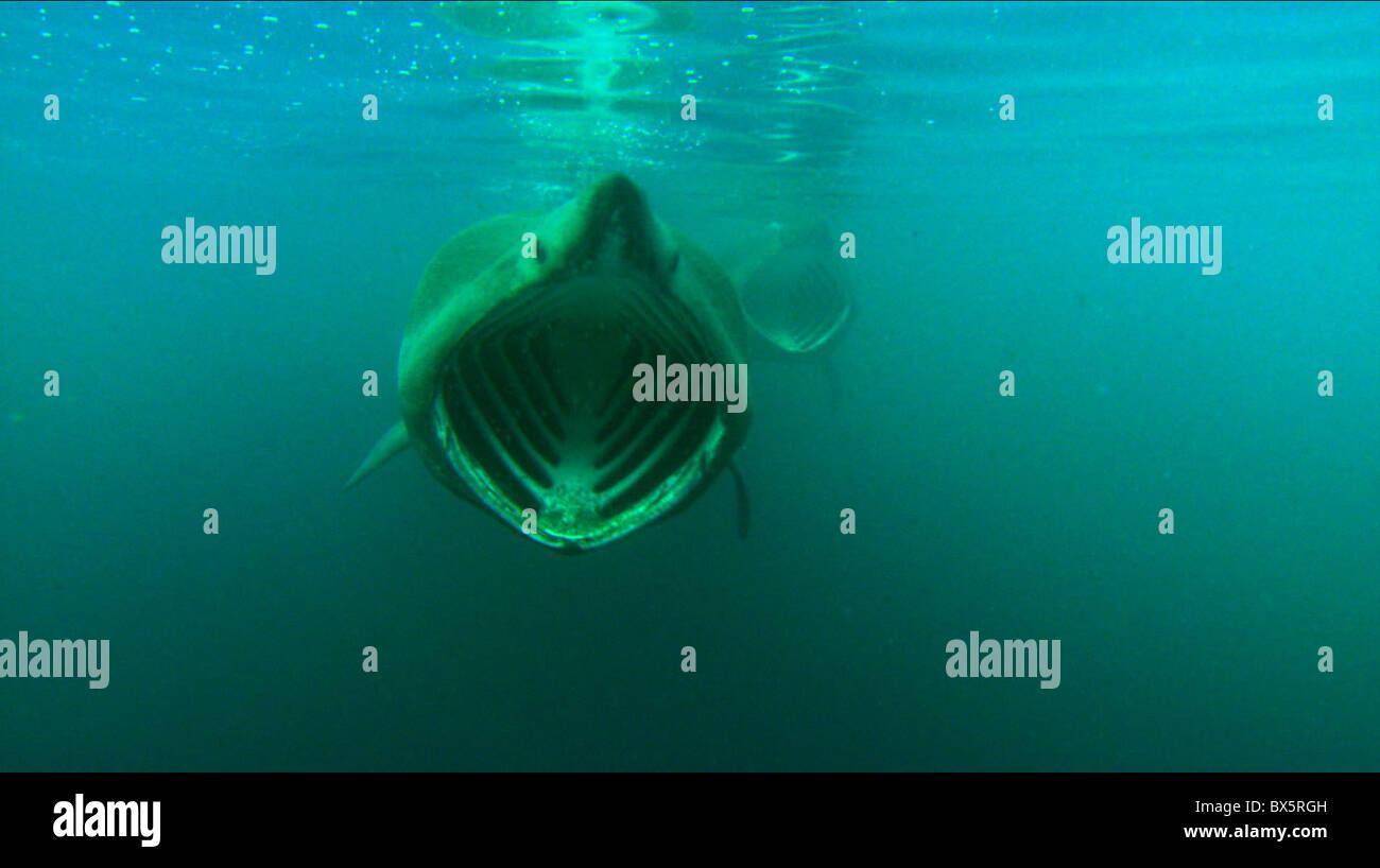 BASKING SHARK TURTLE: THE INCREDIBLE JOURNEY (2009) - Stock Image