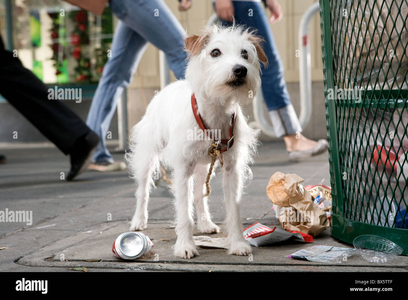 FRIDAY HOTEL FOR DOGS (2009) - Stock Image