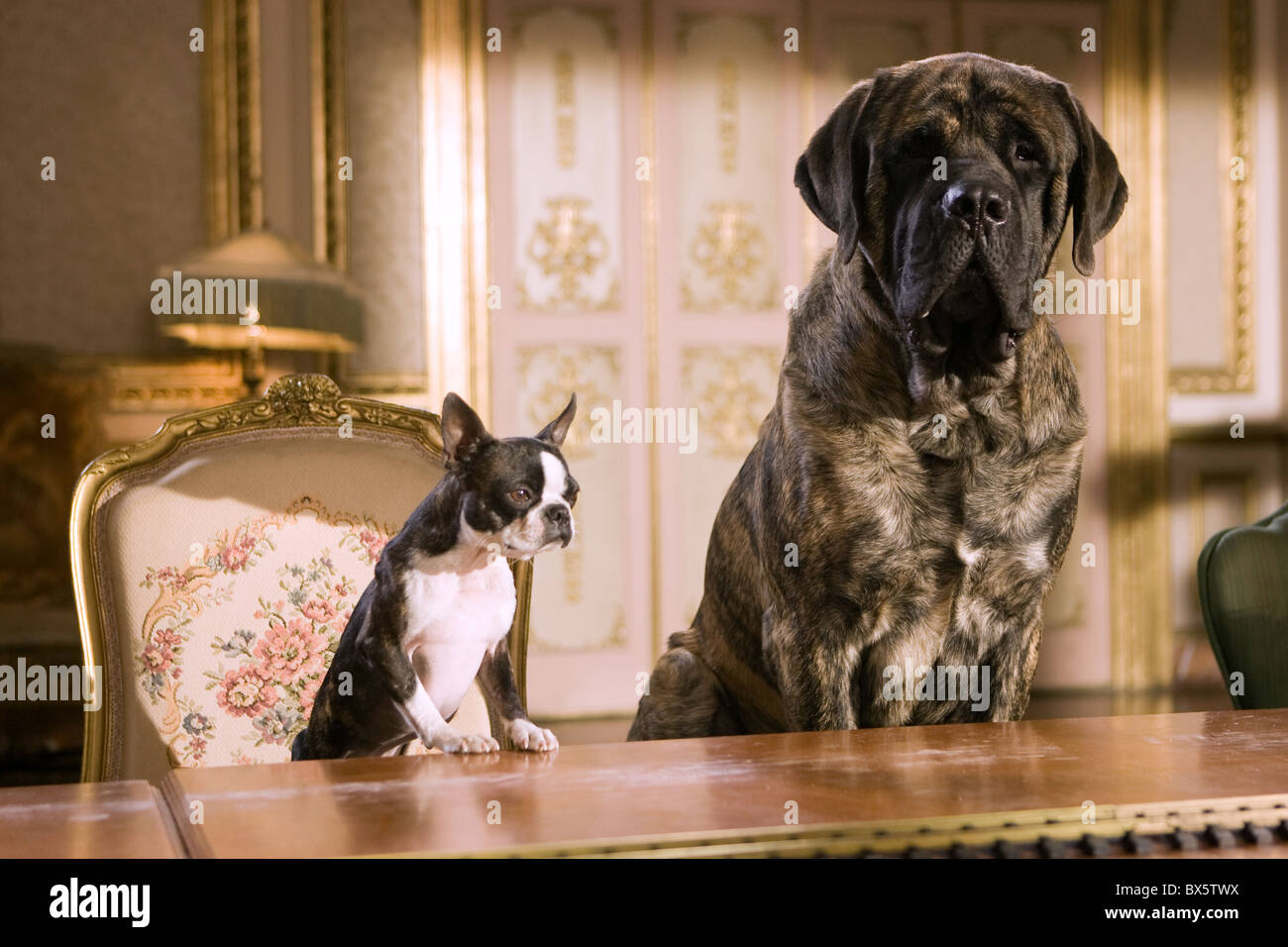Georgia Lenny Hotel For Dogs 2009 Stock Photo 33320726 Alamy