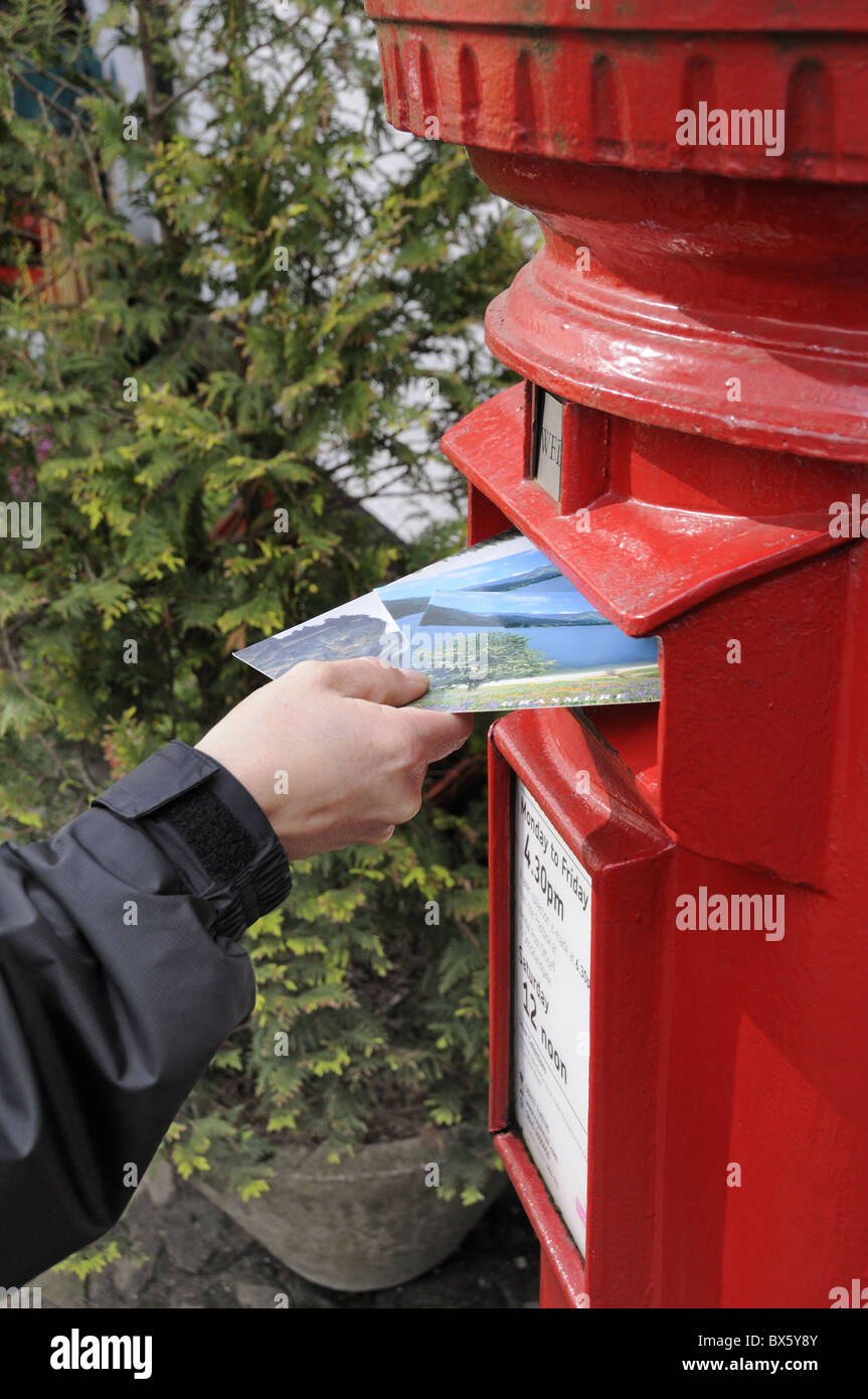 Posting postcards into a traditional red letter box - Stock Image