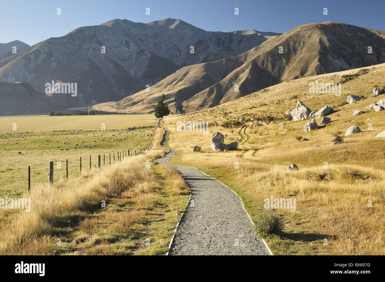 Castle Hill, Canterbury high country, South Island, New Zealand, Pacific - Stock Image