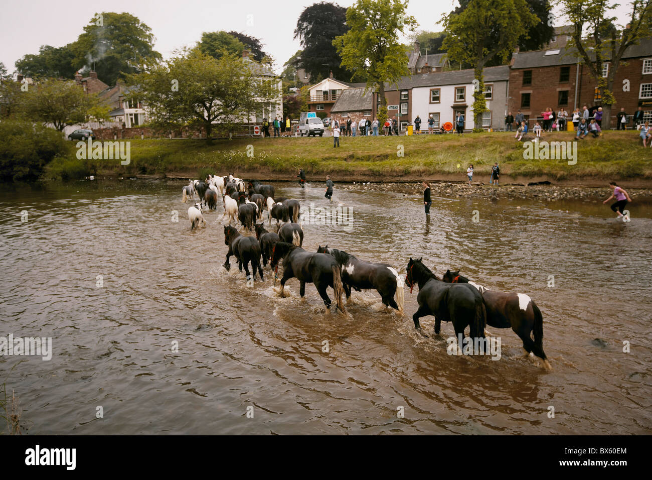 Gypsy travellers washing horses in the river Eden during the Appleby Horse Fair, Appleby-in-Westmorland, Cumbria, - Stock Image