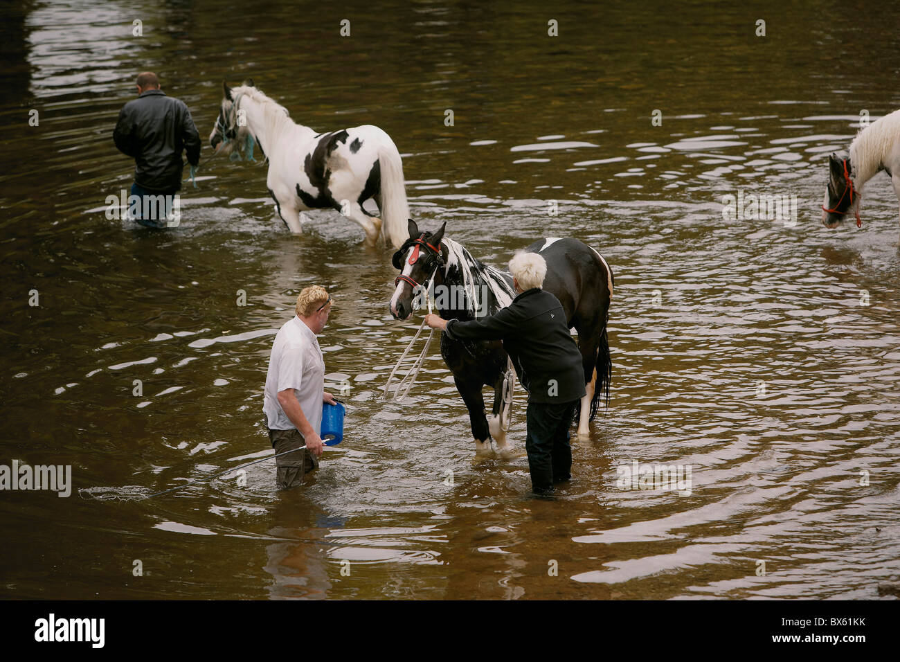 Gypsy travellers washing horses in the river Eden during the Appleby Horse Fair, Appleby-in-Westmorland, Cumbria, Stock Photo