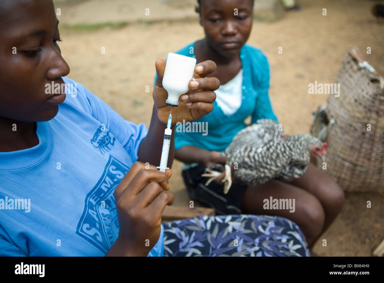 A veterinary worker draws medicine from a bottle in Kakata, Liberia, West Africa. - Stock Image