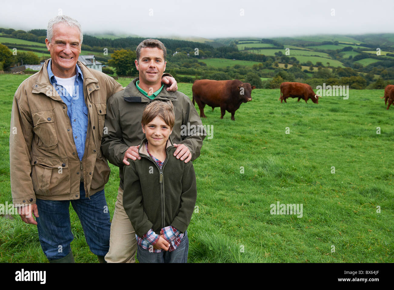 Father, son and Grandfather with cows - Stock Image