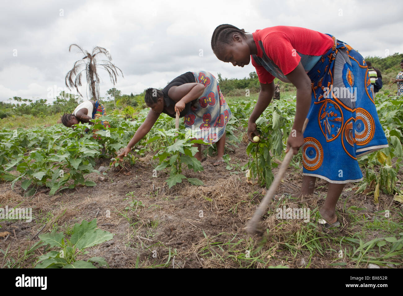 Farmers work in a vegetable field in Kakata, Liberia, West Africa. - Stock Image