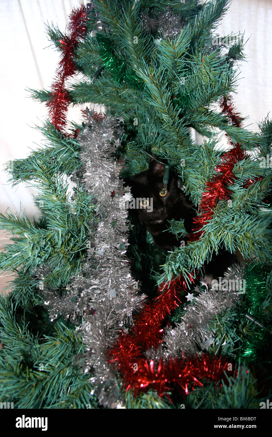 black cat in a plastic christmas tree stock image - Black Cat Christmas Tree