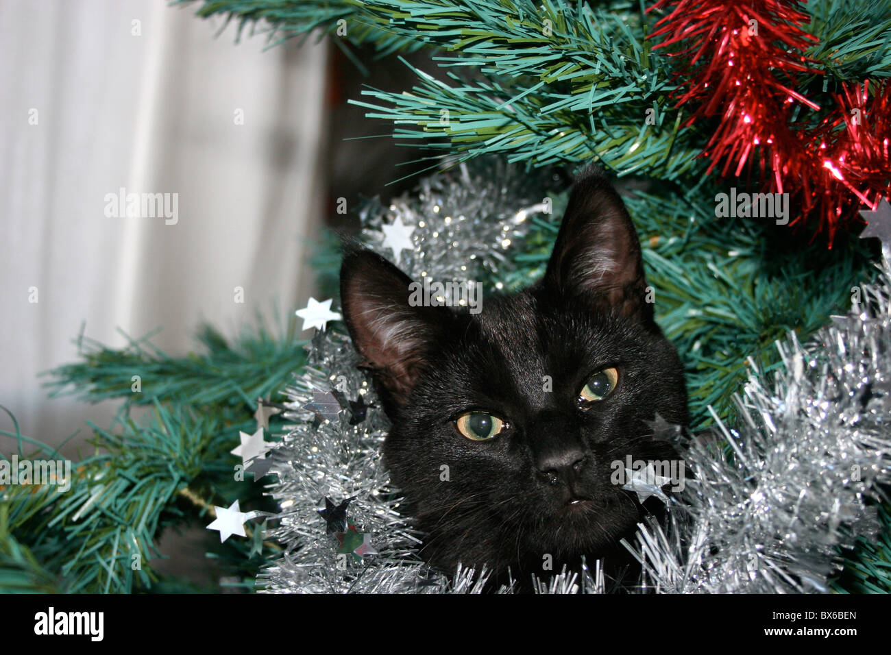 black cat in a plastic christmas tree stock image