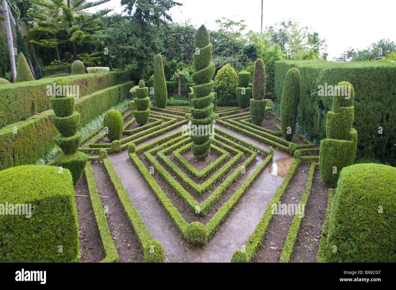Topiary in formal garden, Botanical Garden, Funchal, Madeira, Portugal, Europe - Stock Image