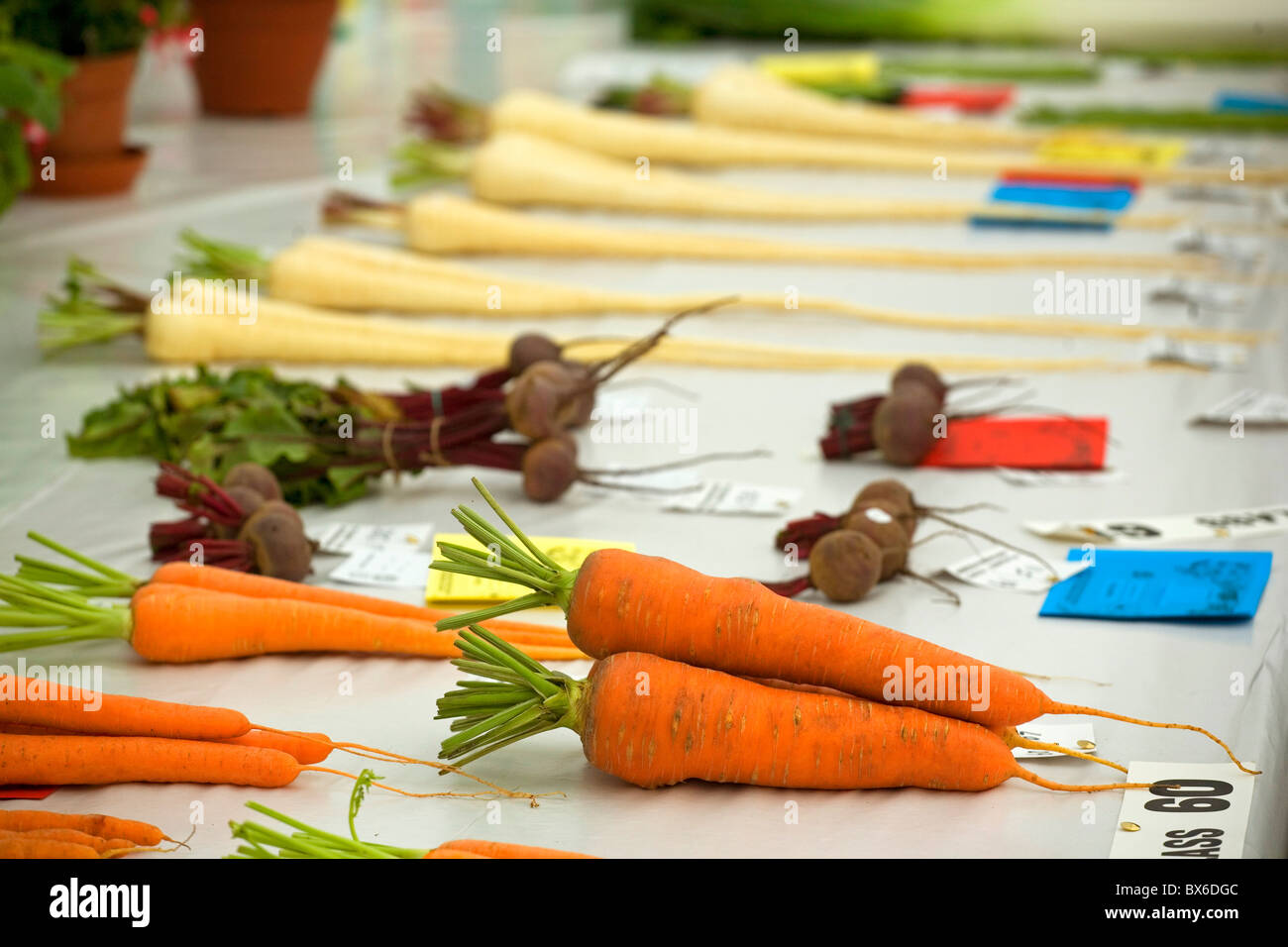Prize-winning vegetables at a country show - Stock Image